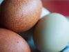 122_eggs_5711