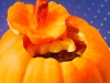 4_thomas_haas_pumpkin3071
