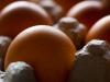 79_egg-flat