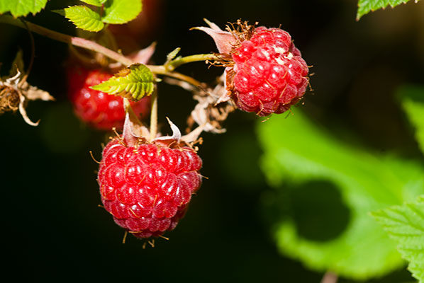 131_raspberry_7440